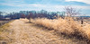 fence line (12/365) (severalsnakes) Tags: 365 ks2 m3528 missouri pentax saraspaedy countryroad dirtroad farm fence foxtail grass gravelroad manual manualfocus rural pano panorama microsoft ice stitch