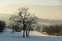 Black trees (nathaliedunaigre) Tags: paysage landscape duingt hautesavoie france hiver winter montagnes mountains neige snow arbres trees noir black