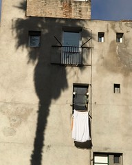 (Julia Manzerova) Tags: barcelona contrast hang laundry light palm palmtree shadow sheet sun wall