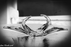Playing with glass and light (Gian Floridia) Tags: ali bn bw bienne cigno dreams experiment forms glass ideas light monochrome play solarization swan wings