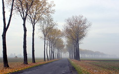 november hues (4) (kexi) Tags: poland polska europe opolszczyzna road curve trees mist fall autumn canon november 2015 perspective fog wallpaper landscape paysage view instantfave