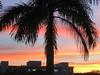 Good Morning Sarasota (soniaadammurray - Off) Tags: iphone sunrise sky clouds tree buldings reflections nature 2017