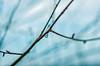 It's hidden - but frozen. (Janne Fairy) Tags: water drop waterdrop wassertropfen winter ast knob knot wasser ice frosted gefroren bokeh schärfentiefe depthoffield depth field canon canon500d eos500d