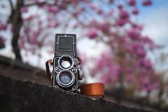 Rolleiflex 2.8D|螺肉 雙眼相機 (里卡豆) Tags: olympus penf 台灣 taiwan 雙眼 25mm f12 pro 2512pro rolleiflex28d 螺肉 雙眼相機 rolleiflex