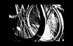 "Wheel (karakutaia) Tags: sun tree love nature japan paper temple tokyo heart afotando ""flickraward"" flickrglobal allbeautifulshotsandmanymoreilovenature flowerstampblackandwhite transeguzkilorestreetarturbanagreatshotthisisexcellentcontestmovementricohgxr""serendipitygroupbluenatureicapturecardjapanesepapercardflickraward5""j trasognoerealtabstractelementsorganizersimplysuperb"