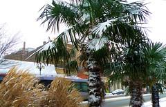 2008_12_17 (DennisSylvesterHurd) Tags: snow newwestminster columbiastreet dailypictureparade downtownnewwest december2008