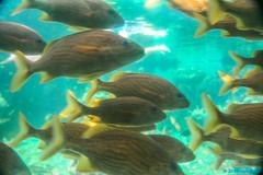 fish animal aquarium florida indoor 2006 photograph amusementpark typhoonlagoon waltdisneyworldresort floridatour