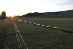 Sawyer Johnson - Barb Wire Fence near Elliston