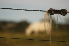 Horse (9670) (Jorge Belim) Tags: animal cavalo 70200 equino canoneos7d