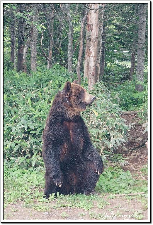 熊牧場 (23)