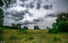 Wolken 3 (straab) Tags: sky clouds deutschland natur wolken drama mainz cloudporn rheinlandpfalz naturschutzgebiet fotowalk mainzersand