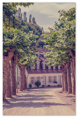 Platanenallee (Nihil Baxter007) Tags: trees house tree nature natur haus grn bume baum allee auerbach frst bensheim platanen frstenlager platanenallee