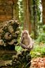 monkey having a snack (Sam Scholes) Tags: sangehmonkeyforest badungregency purabukitsari hinduism hindu travel bukitsaritemple bali palaforest sangeh holymonkeyforest vacation indonesia denpasar moneyforest abiansemal id