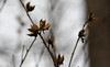Winter Blossoms (vbd) Tags: pentax k3 vbd smcpentaxda55300mmf458ed ct connecticut flower newengland seedpod withered 2015 winter2015 handheld trumbull