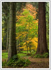 Into the woods (adam_pierz) Tags: autumn virginiawater trees woodland nikond600