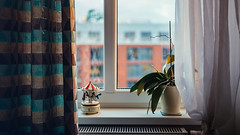 17.01.2017 (Fregoli Cotard) Tags: window throughthewindow flower orchid design carousel decoration poznan dailyjournal dailyphotograph dailyphoto daily dailyproject 365 365daily 365dailyproject 365days 365dailyphoto 365dailyphotography 365project 365photoproject 365photography 365photos 365photochallenge 365challenge everydayphoto everydayphotography everydayjournal 365everyday photojournal photodiary photographicaljournal aphotoeveryday 17365 17of365