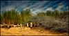 Good Vibrations - Beach Boys (Janusz Kudlak) Tags: sand beach grass myniu pastuch uk england ilovemywife agnieszka sony alpha700