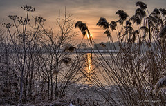 Soleil d'hiver ... (Prx.01) Tags: étang hiver matin gel roseaux leverdesoleil waterscape landscape paysage fuji xm1 1024mm