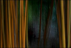 Grace  #8500 (Christina's World aka Chrissie Bee) Tags: bamboo nature art creative trees icm intentionalcameramovement colors light shape form movement impressionism expressionism landscape abstract painterly plants stilllife