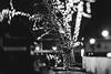 Light Tree | Bokeh #352/36 (A. Aleksandravičius) Tags: street lights xmas night bokeh lietuva lithuania kaunas bw nikon lensbaby composer pro edge80 edge80optic 80mm lensbaby80 nikond810 d810 365days 3652016 365 project365 352365