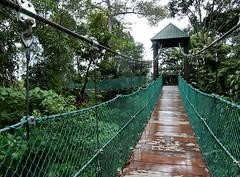 Wet Swing Bridge (mikecogh) Tags: kualalumpur rainforest kl ecopark wet swingbridge