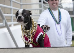 2017 Gasparilla Parade and Pirate Festival (Coast Guard News) Tags: dog coastguardcuttervice stpetersburg josegaspar pirateship josegasparillapirateinvasion tampa florida unitedstates us