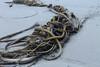 Bulb kelp washed up on shore, Long Beach, Pacific Rim Park, Vancouver Island, Vancouver, BC (Jim 03) Tags: long beach largest longest pacific rim national park vancouver island bc wickanninish bay tofino ucluelet fog bulb kelp barnacles mussels forest jim03 jimhoffman jhoffman jim wwwjimahoffmancom wwwflickrcomphotosjhoffman2013