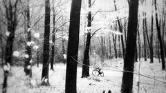 Now (Ans (major computer problems)) Tags: ansvandesluis forest trees woods bw blackwhite mobilephone mobile phone bicycle artofthebicycle