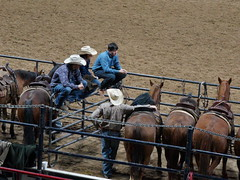 Lot of bull going on (jeffsmith565@yahoo) Tags: tock horses cowboys hats eventcenter nationalstockshow winter jeffsmith
