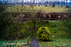 Grüne Aussicht (Bernsteindrache7) Tags: winter sony alpha 100 düsseldorf flora fauna tree garden germany green nrw outdoor landscape panorama