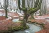 Stream among the trees (Jesus Bravo) Tags: forest beech stream long exposure tree river gorbea gorbeia bizkaia euskadi basque country spain