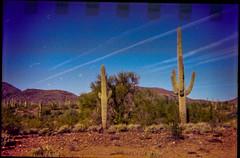 Lomography Konstruktor / Lomography 400 (K e v i n) Tags: lomographykonstruktor lomography400 35mm firstroll 1stroll film analog epsonv500 scan sonorandesert desert newriver blackcanyontrail arizona az saguaros cactus cacti nature outside