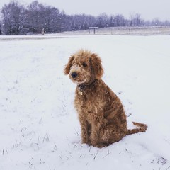 Dazzle and Chewy II's Flo loves the snow!
