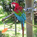 Jungle Garden - Macaw