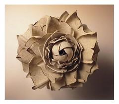 abstrait fleur (HER.Cha.) Tags: fleur abstrait