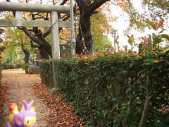 Ambipom in Kasukabe, Saitama 2 (Kasadera) Tags: toys figure pokemon pokmon  kasukabe   pokemonkids  ambipom     ambidiffel capidextre