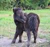 Ficolas de Coise (Laura_Photographie) Tags: horse nature animal cheval pony animaux bébé foal poulain poney véra ficolas