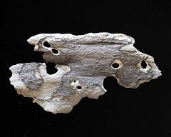 IMG_4982 (j.towbin ) Tags: macro texture nature faces holes bark minimalsim allrightsreserved
