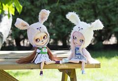 Lovely Bunnies ♥