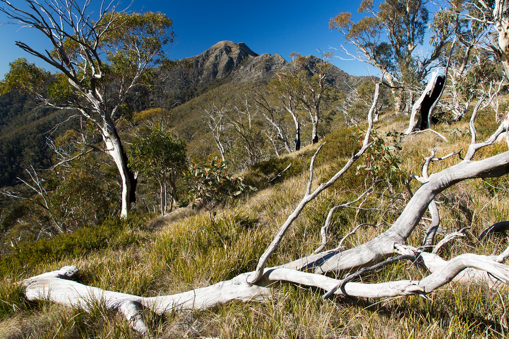 Mount Buller viewed from low on the West by jimmyharris, on Flickr