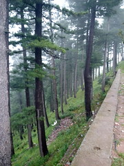 Shogran (zasami) Tags: pakistan green forest plateau pines shogran 2015 kpk