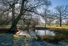 Ickworth Park Pond-3774 (johnboy!) Tags: ickworthpark ickworthhouse ickworth deadtrees nationaltrust