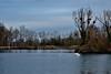 DSC_0138 (patrice.gouriet) Tags: swan cygne gravière bouleaux takeoff décollage d5200 bischheim ballastière