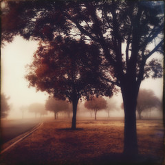 (yosmama151) Tags: iphone iphoneography mobilephotography app edited hipstamatic hipstamaticapp snapseed snapseedapp trees fog foggy foggyday foggymorning earlywinepark earlywine