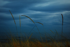 Beach Grasses in Last Light (imageClear) Tags: evening lastlight lakemichigan sheboygan wisconsin nikon d500 35mmf18dx beauty color lovely lowlight aperture picmonkeycom imageclear flickr photostream landscape