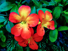 Brright Red (Steve Taylor (Photography)) Tags: art digital blue black green red yellow singapore asia plant flower leaves cloudforest gardensbythebay marinabay
