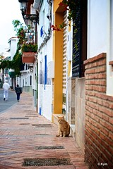 Kitty (Kym.) Tags: andalucía andalusia cat day7 kitty nerja otherpeoplesgang spain