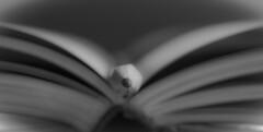 (niro68) Tags: book pencil focus point
