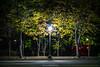 light at night (gwnam.2008) Tags: tree plant flower nature urbannature yellow orangecolor green greencolor park naturalbeauty night nighttime mapogu seoul korea southkorea samsungnx nx