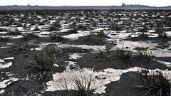 """Le marécage désertique """"playa hermosa"""" du volcan Irazu"""